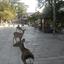 Nara Deer Park - Kyoto
