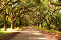 New Orleans Super Saver: Swamp and Bayou Sightseeing plus Oak Alley Plantation Tour Photos