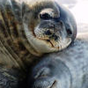 New York Harbor Winter Wildlife Cruise