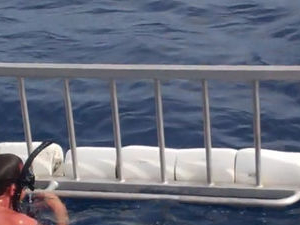 Oahu Shark Dive Photos