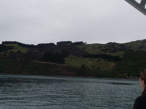 Akaroa Swim with Dolphins Tour from Christchurch Photos