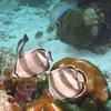 St Kitts Shore Excursion: Pelican Cove Snorkel Tour