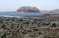 Phillip Island Nature Park and Wildlife Seals Cruise Photos