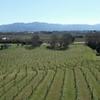 Picton Shore Excursion: Marlborough Wine Region Small-Group Tour