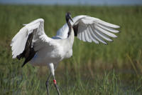 Private Tour: Birdwatching in Dongtan Wetland Park from Shanghai Photos