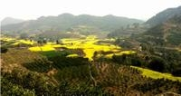 Private Tour: Huanglongxi Ancient Town and Countryside Trekking from Chengdu Photos