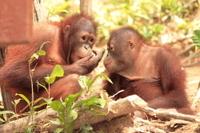 Private Tour: Orangutan Island, Taiping Zoo and Perak Museum from Penang