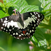 Private Tour: Kuala Lumpur Nature In The City Tour including Butterfly Park