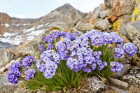 Private Tour: Yosemite Wildflower Hike Photos