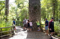 Puketi Rainforest Guided Walks Photos