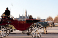 Romantic Vienna Combo: Vienna Card, Horse and Carriage Tour, Belvedere Palace and Candlelight Dinner Photos