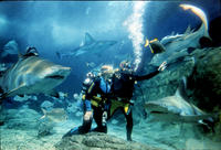Shark Dive Experience at Melbourne SEA LIFE Aquarium Photos