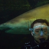 Shark Diving Xtreme in Sydney