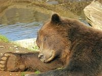 Sitka Sightseeing Tour including Fortress of the Bear Photos