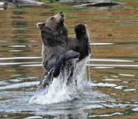 Sitka Super Saver: Whale-Watching Cruise and City Sightseeing Tour  Photos