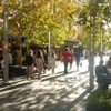 Small Bars of Perth Walking Tour