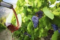 Small-Group Santorini Wine Tasting and Vineyard Tour Photos
