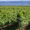 Small-Group Annapolis Valley Wine and Food Tour from Halifax
