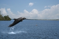 Small-Group Dolphin-Watching Cruise from Goa Photos