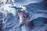 Small-Group Mornington Peninsula Tour from Melbourne with Dolphins and Seals Cruise Photos