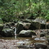 St Kitts Half-Day Rainforest Tour