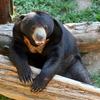 Sun Bear Keeper for a Day: Phnom Tamao Wildlife Rescue Center Day Trip