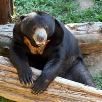 Sun Bear Keeper for a Day: Phnom Tamao Wildlife Rescue Center Day Trip Photos