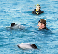 Swimming with Dolphins in Akaroa Photos