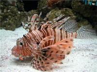 Tampa Shore Excursion: The Florida Aquarium in Tampa Bay Photos