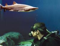 Tampa Trio Pass: Florida Aquarium, Tampa's Lowry Park Zoo and MOSI Photos
