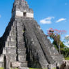 Tikal Day Trip from San Ignacio