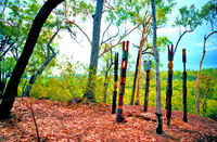 Tiwi Islands Cultural Experience from Darwin Including Flights Photos
