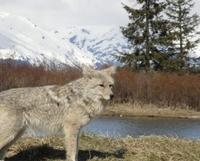 Turnagain Arm and Alaska Wildlife Tour from Anchorage Photos