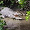 Whitsunday Crocodile Safari including Lunch
