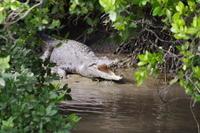Whitsunday Crocodile Safari including Lunch Photos