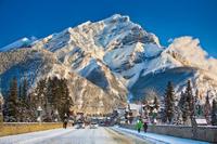 Winter Tour: Banff and its Wildlife Photos