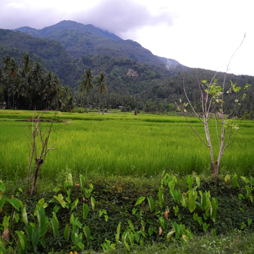 Camiguin Island: Camiguin Island, Philippines Tourist Information